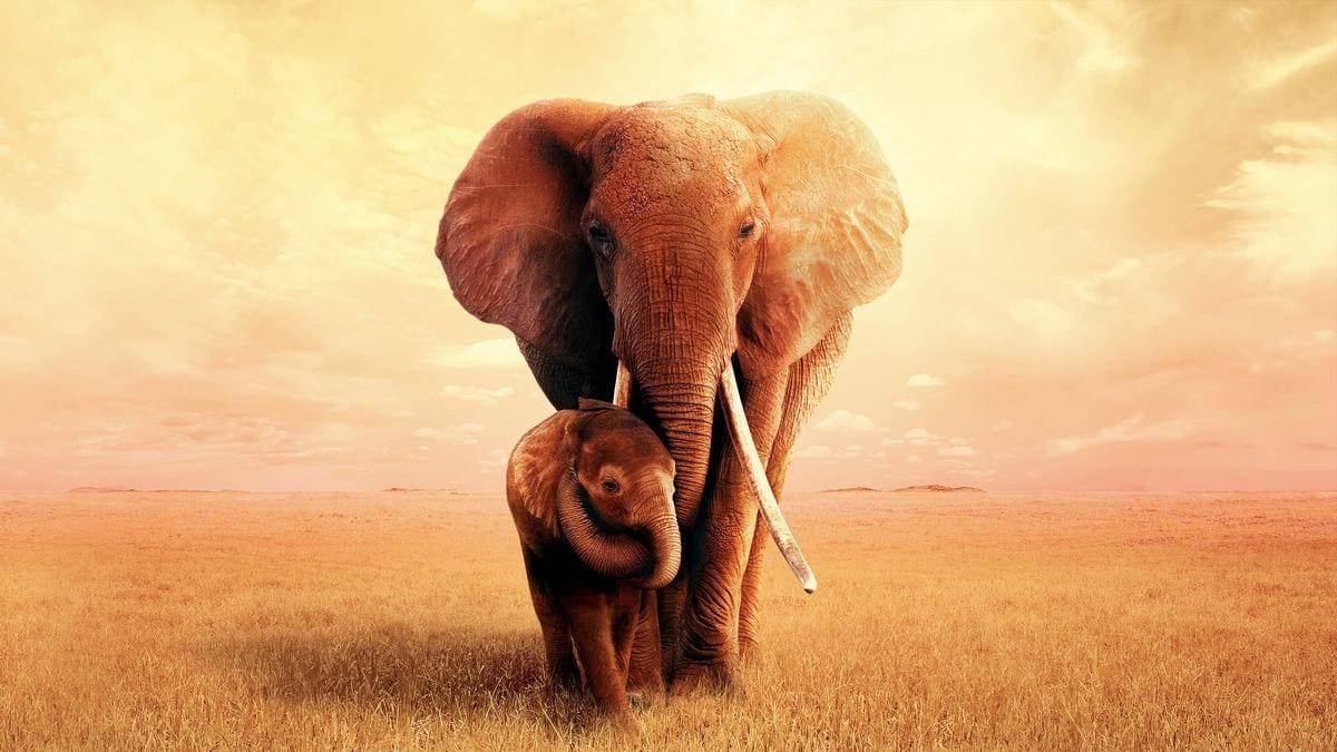Królowa słoni